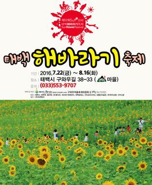 제12회 태백 해바라기 축제