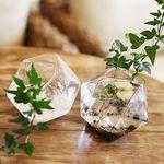 20각면체의 비밀-공기정화&천연가습 수경식물